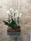 """Beautiful Blooming"" Orchid Plant - PREMIUM"
