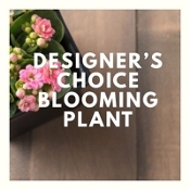 """Deal of the Day"" - Blooming Plant Gift - GREAT VALUE!"